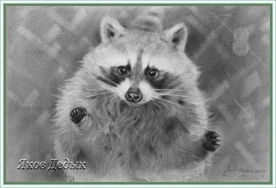 pipsqueak raccoon. drawing #195 by yakovdedyk