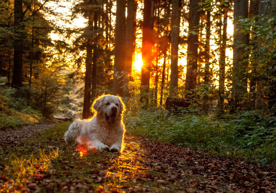Praise the sun by whitewolffighter