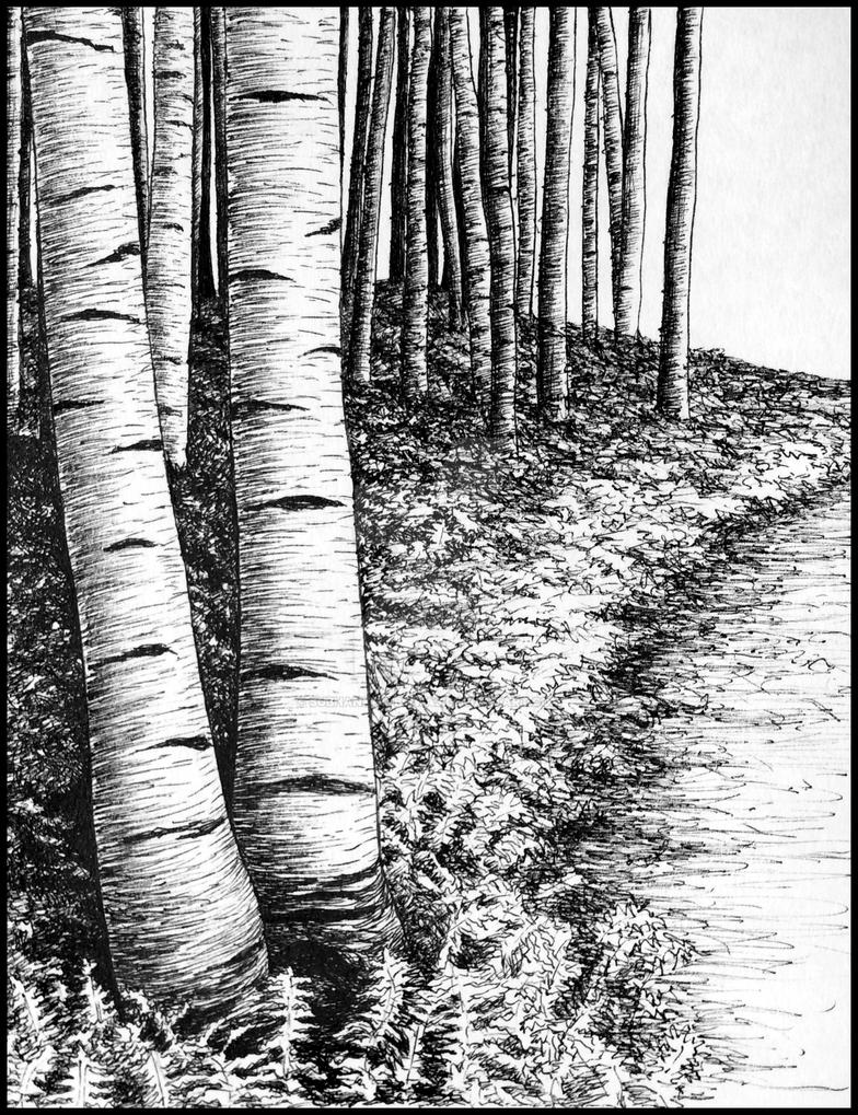 Birch trees by subhankar-biswas
