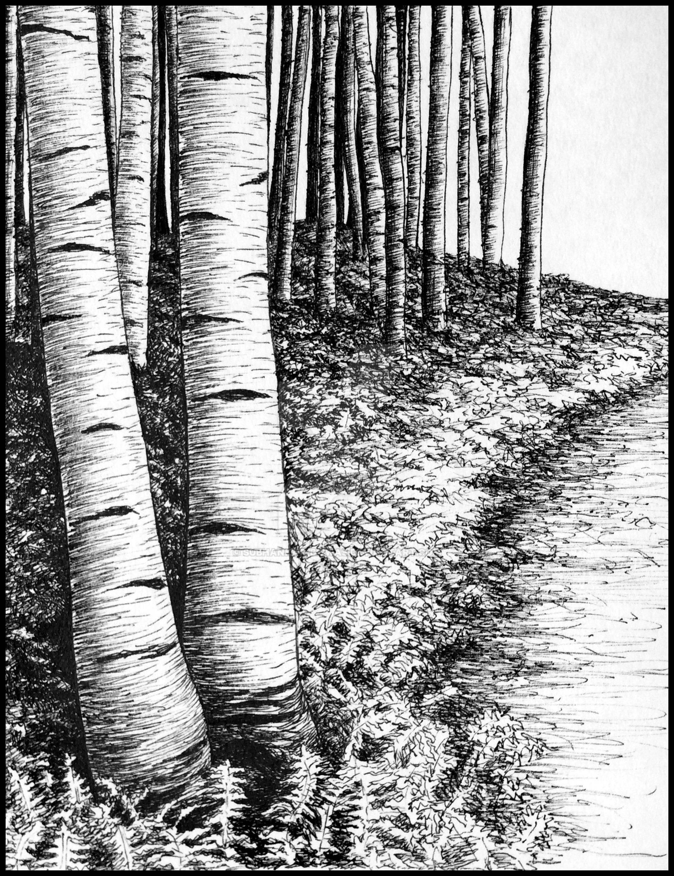 Birch trees by subhankar-biswas