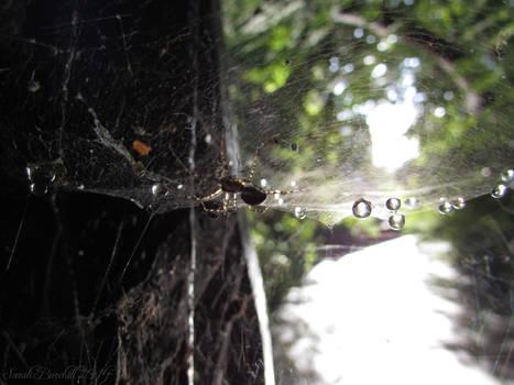 Aqua Spider Spheres