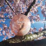 Sakura glass bauble