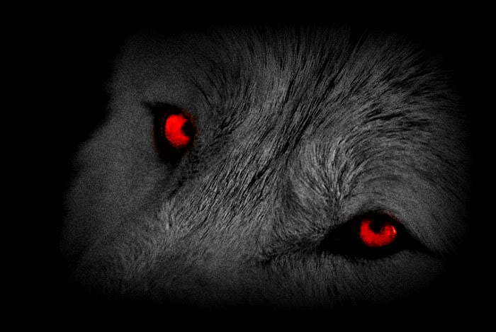 Wolf Eyes by Vate98 on DeviantArt