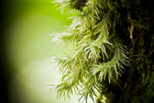 Micro plants