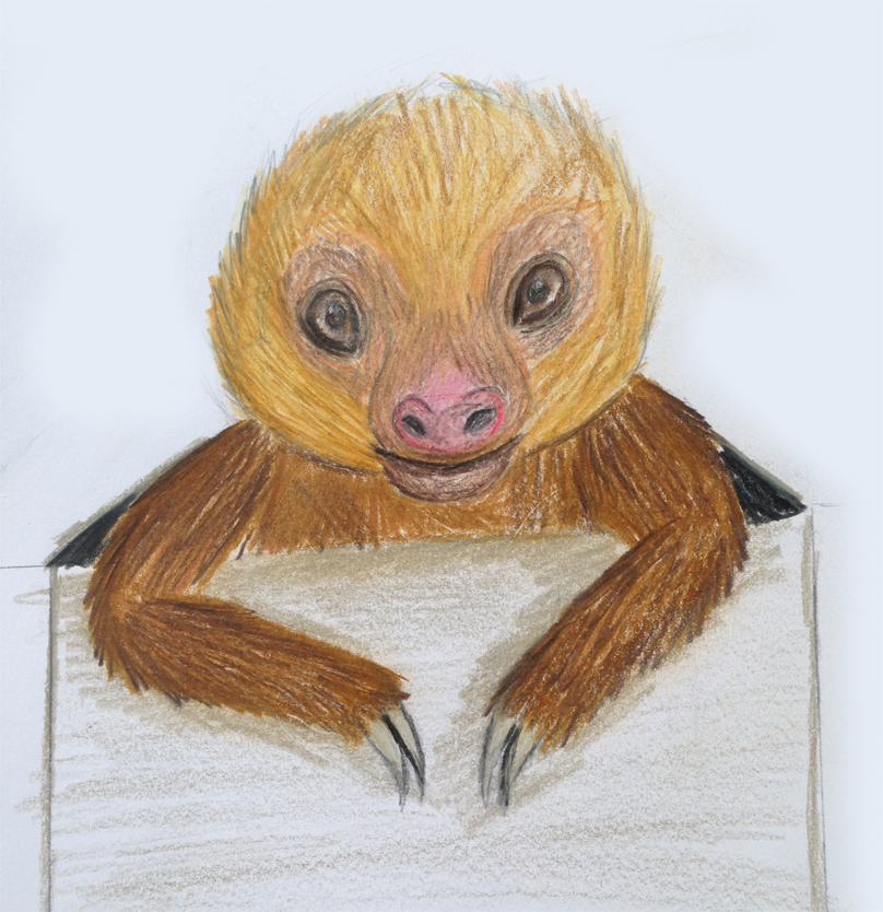 Two toed Sloth -Coloured Pencil Drawing by High-Low