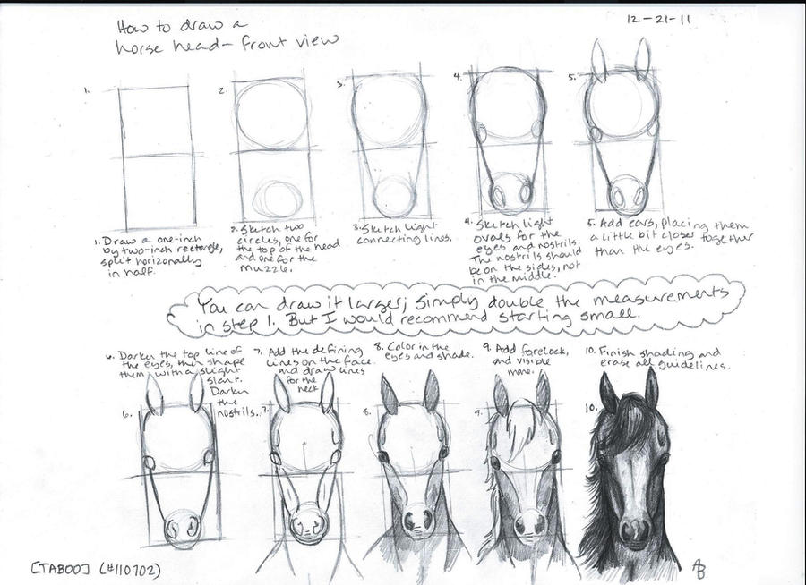 How to Draw a Horse Head--Front View by a-n-0-n-y-m-o-u-s