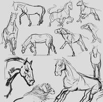 Horse Studies by JordyLakiere