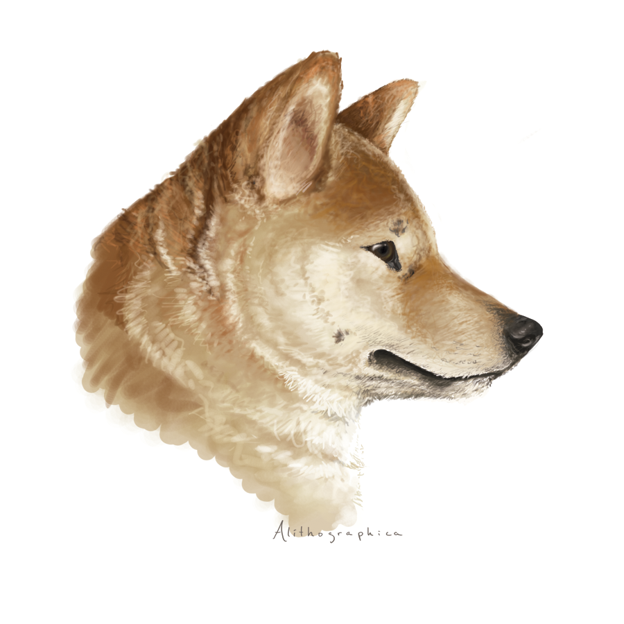 Shiba inu by alithographica on deviantart shiba inu by alithographica shiba inu by alithographica ccuart Choice Image