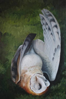 Minerva's Owl in Oils