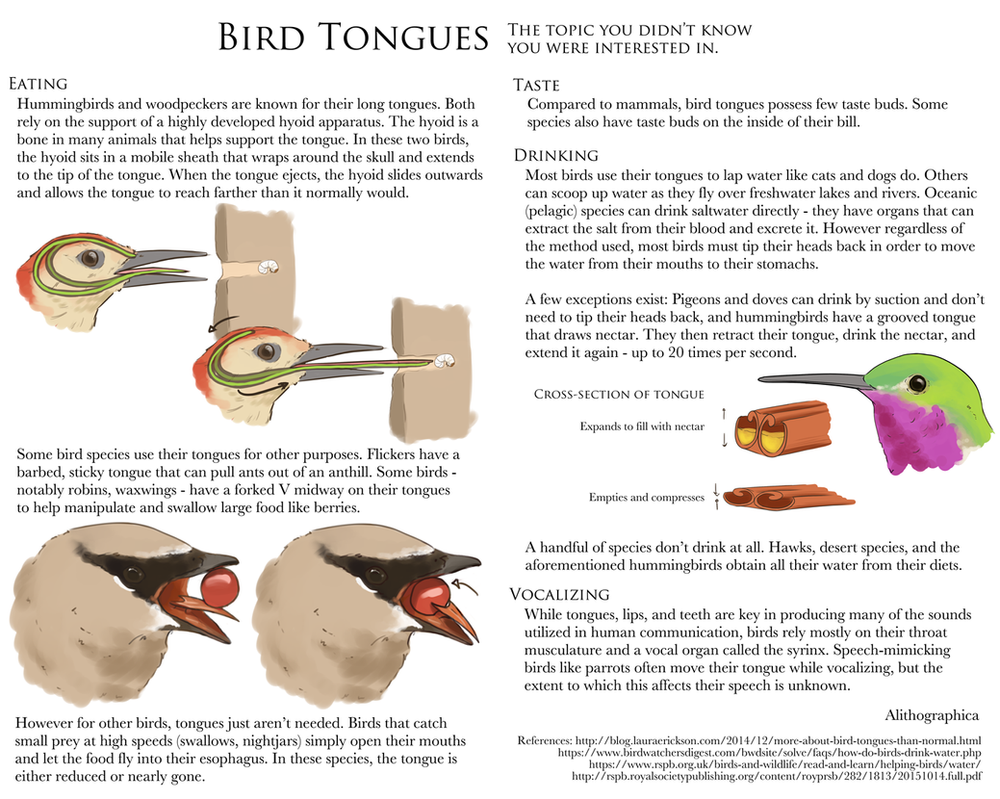 Science Fact Friday: Bird Tongues by Alithographica on DeviantArt