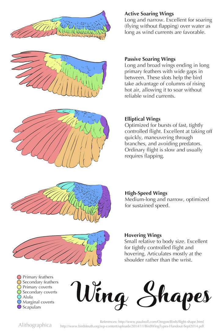 Science Fact Friday: Wing Shapes
