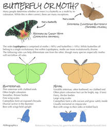 Science Fact Friday: Lepidoptera