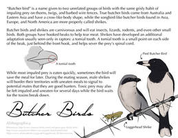 Science Fact Friday: Butcher Birds by Alithographica