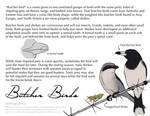 Science Fact Friday: Butcher Birds