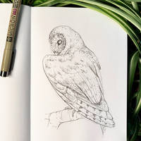 Inktober 17: Barn Owl by Alithographica