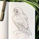 Inktober 17: Barn Owl
