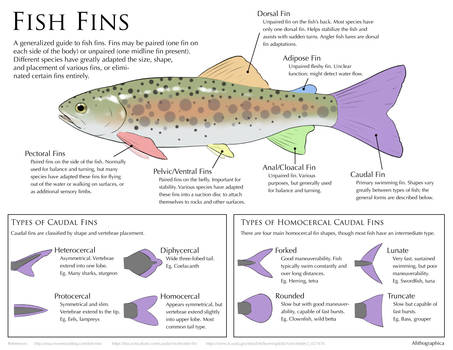 Science Fact Friday: Fish Fins