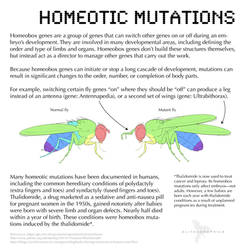 Science Fact Friday: Homeotic Mutations by Alithographica