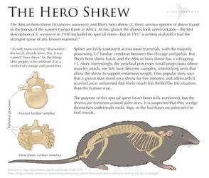 Science Fact Friday: Hero Shrews by Alithographica