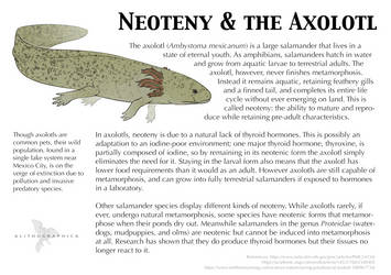 Science Fact Friday: Neoteny in the Axolotl by Alithographica