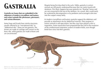 Science Fact Friday: Gastralia by Alithographica
