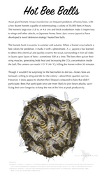 Science Fact Friday: Hot Bee Balls