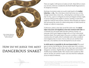 Science Fact Friday: Dangerous Snakes