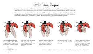 Science Fact Friday: Beetle Wing Origami