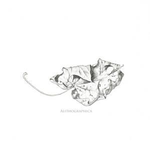 Stippled Leaf