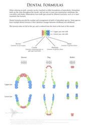 Science Fact Friday: Dental Formulas