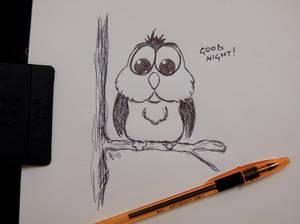 Little owl - Goodnight :)