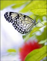 butterfly 7 by RichardRobert