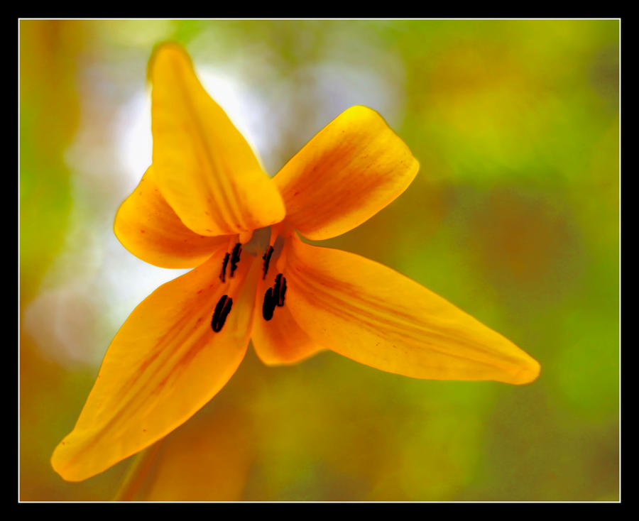 springtime1 by RichardRobert