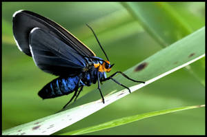 butterfly 10 by RichardRobert
