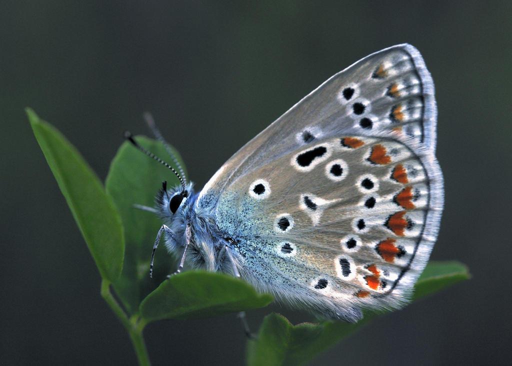 butterfly by RichardRobert