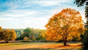 Autumn by Kotowaru