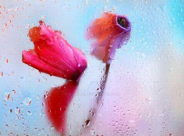 Flowers by V-i-k-k-i