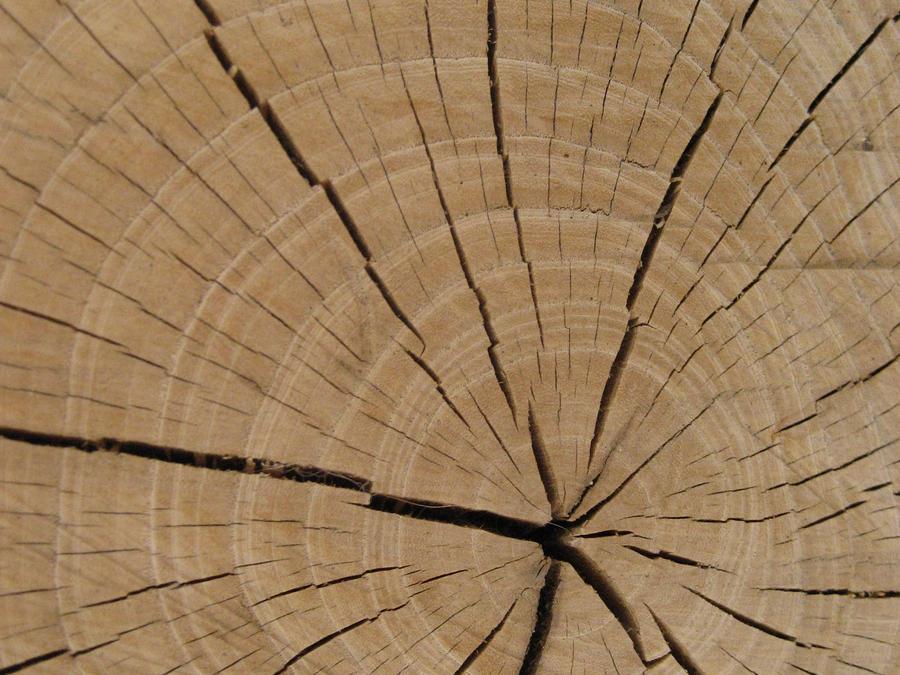 Tree Stump Texture by shishahariken