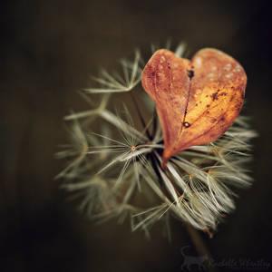 Love the Little Things by RainaAstaldo