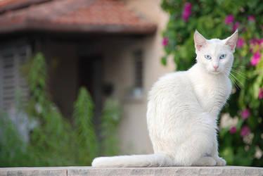cat by RidesWind44