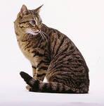 tabby cat by RidesWind44