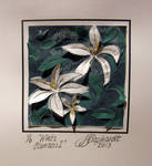 2013 03 19 White Clematis I 6X7