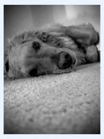 Hound Dog by Enronian