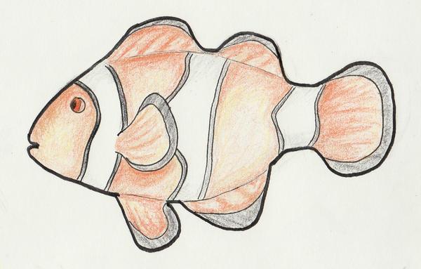 color pencil clown fish by amrix11 on deviantart