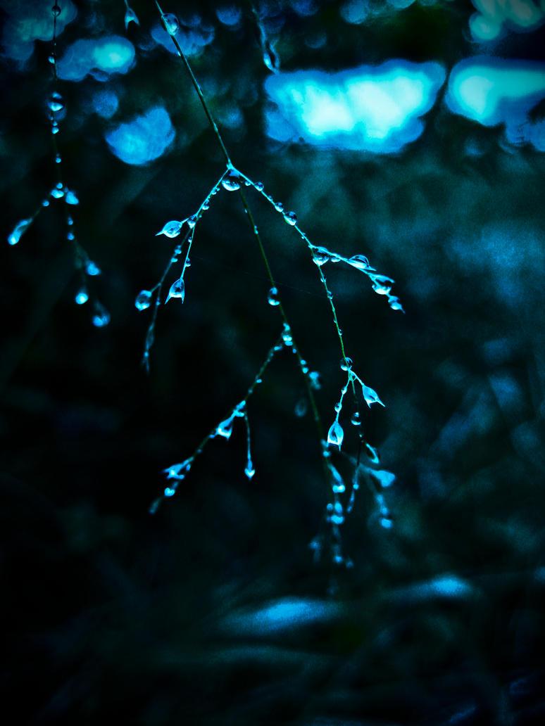 Delicate Beauty by DafoeofLenin