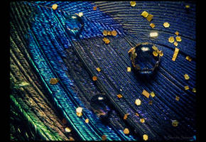 Peacock feather with drops... by DafoeofLenin