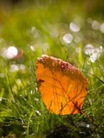 Leaf and Bokeh. by DafoeofLenin