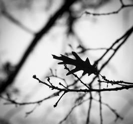 Autumn's End II. by DafoeofLenin