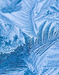 Frozen feathers. by DafoeofLenin