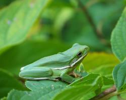 Being Green by joyandsoul
